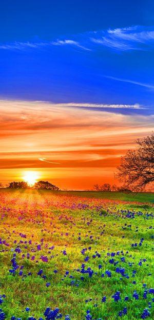 1080x2248 Background HD Wallpaper 259 300x624 - 1080x2248 Wallpapers