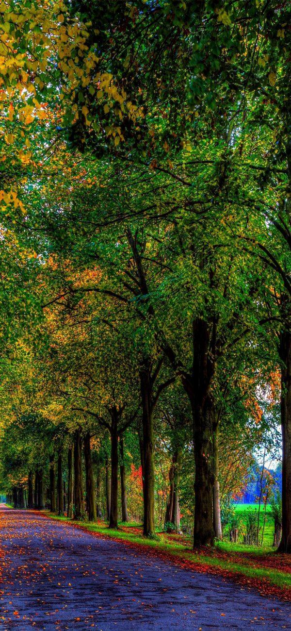 1080x2340 Background HD Wallpaper 178 600x1300 - 1080x2340 Background HD Wallpaper - 178
