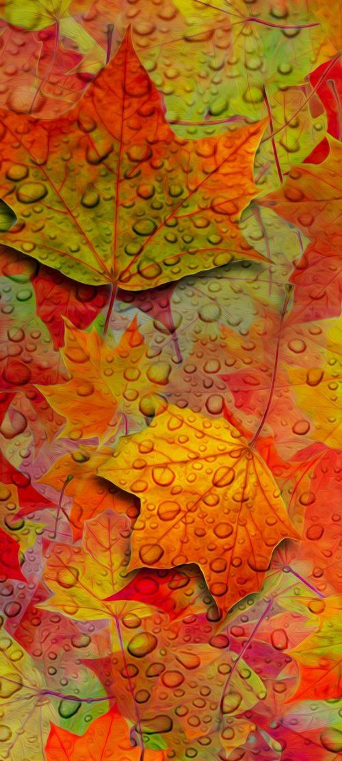 1080x2400 HD Wallpaper 003 500x1111 - 1080x2400 HD Wallpaper - 003