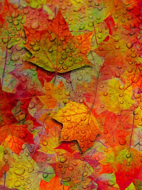 1668x2224 Background HD Wallpaper 023