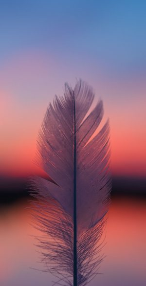 Beautiful Feather Wallpaper 300x585 - Oppo Reno 4 Wallpapers