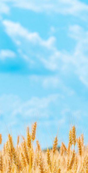 Field and Sky Phone Wallpaper 300x585 - Blue Wallpapers