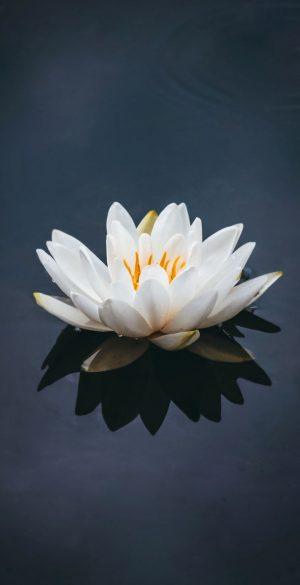 Flower in Water Wallpaper 300x585 - Xiaomi Poco F3 Wallpapers