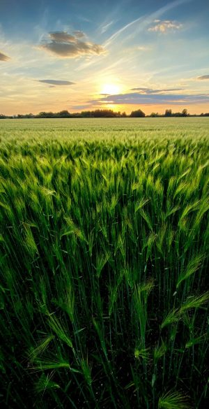 Nature Green Field Phone Wallpaper 300x585 - 1080x2400 Wallpapers