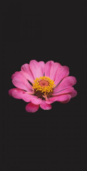 Pink Flower Amoled Black Wallpaper 300x585 - Nature Wallpapers