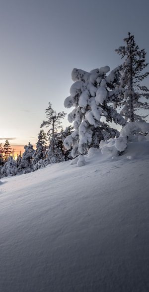 Snow Tree Wallpaper 300x585 - Realme 7 Pro Wallpapers