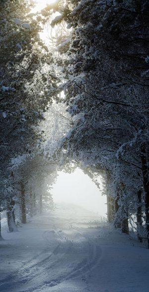 Snow Tree Way Wallpaper 300x585 - Realme 7 Pro Wallpapers