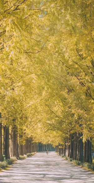 Trees Path Wallpaper 300x585 - Realme 7 Pro Wallpapers