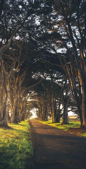 Trees Road Wallpaper 300x585 - Realme 7 Pro Wallpapers