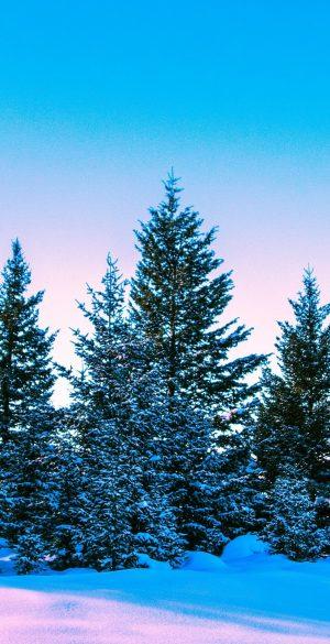 Winter Snow Tree Wallpaper 300x585 - Realme 7 Pro Wallpapers