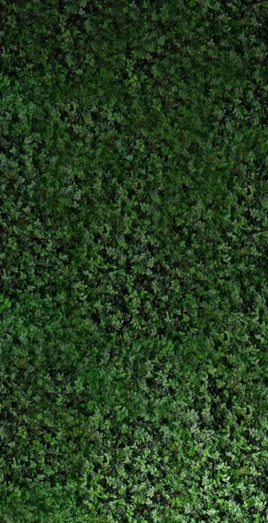 Green Background Phone Wallpaper 21 300x585 - Green Wallpapers