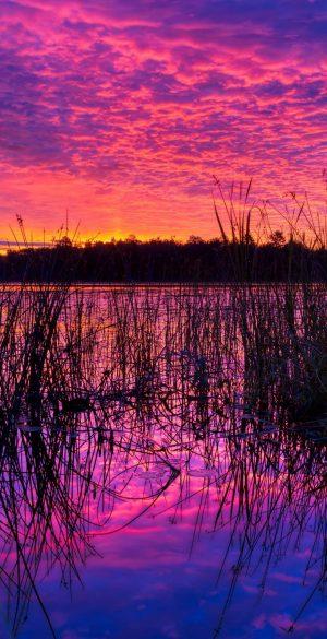 Purple Wallpaper HD 78 300x585 - Purple Wallpapers
