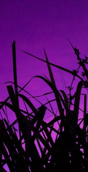 Purple Wallpaper HD 82 300x585 - Purple Wallpapers