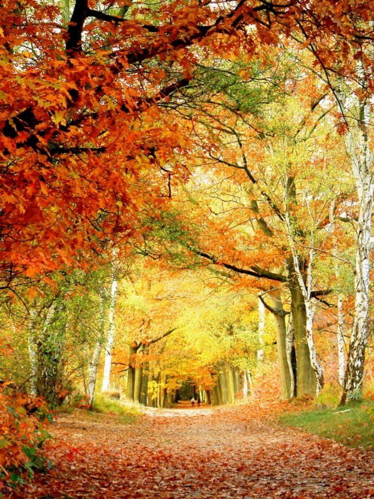 iPad Wallpaper HD 494 768x1025 - iPad Wallpaper HD - 494