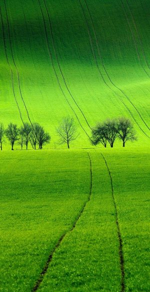 Green Field Wallpaper 300x585 - Vivo Y30 Wallpapers