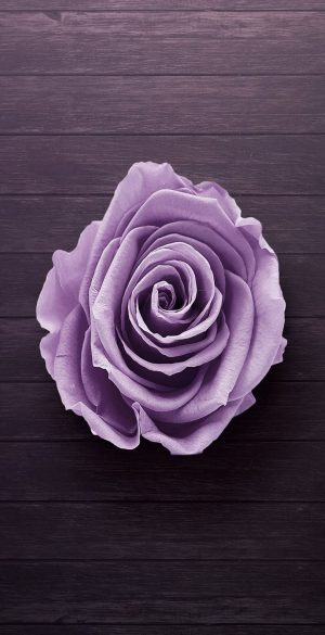Purple Rose Phone Wallpaper 300x585 - Vivo Y30 Wallpapers