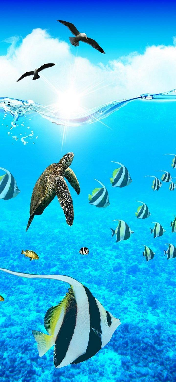Under Water Fish Phone Wallpaper