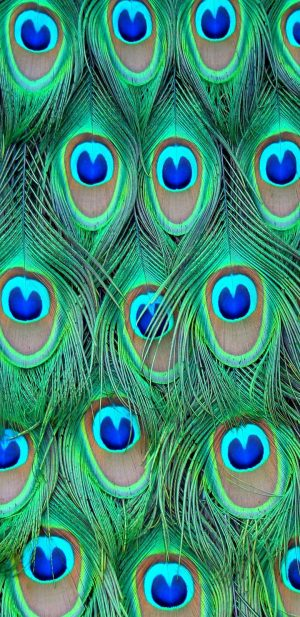 720x1480 Background HD Wallpaper 250 300x617 - Samsung Galaxy J6 Wallpapers