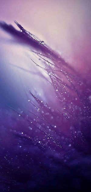720x1520 HD Wallpaper for Mobile Phone 465 300x633 - Alcatel 1S (2020) Wallpapers