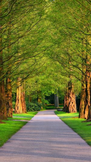 Alley Trees Grass Wallpaper 1080x1920 300x533 - Nature Wallpapers