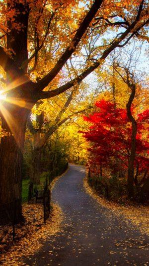 Autumn Park Trees Light Morning Foliage Wallpaper 1080x1920 300x533 - Nature Wallpapers