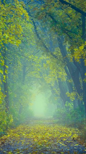 Autumn Path Fog Wallpaper 1080x1920 300x533 - Nature Wallpapers