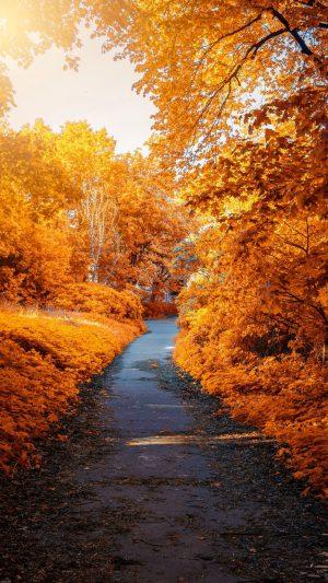 Autumn Path Park Wallpaper 1080x1920 300x533 - Nature Wallpapers