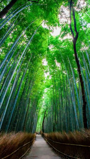Bamboo Forest Trees Wallpaper 1080x1920 300x533 - Nature Wallpapers