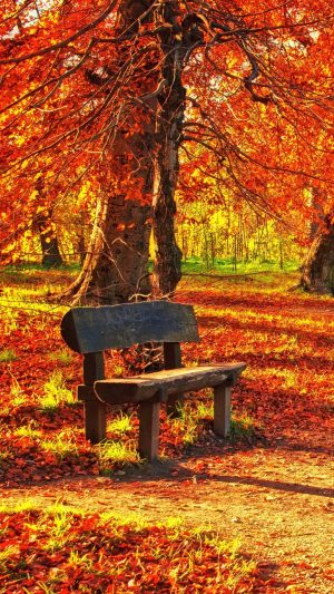 Bench Autumn Park Wallpaper 1080x1920 300x533 - Nature Wallpapers