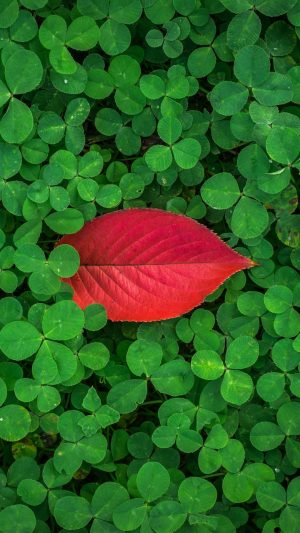 Clover Leaves Plant Green Red Wallpaper 1080x1920 300x533 - Nature Wallpapers