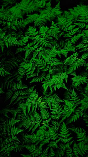 Fern Leaves Green Wallpaper 1080x1920 300x533 - Nature iPhone Wallpapers