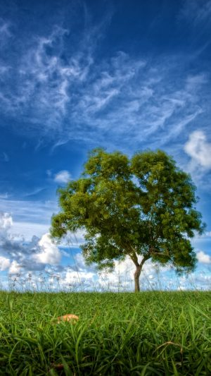 Field Sky Tree Wallpaper 1080x1920 300x533 - Nature iPhone Wallpapers