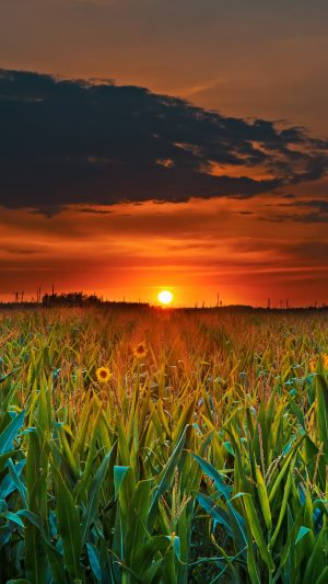 Field Sunset Clouds Wallpaper 1080x1920 300x533 - Nature iPhone Wallpapers