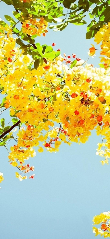 Flower Hd Phone Wallpaper 019