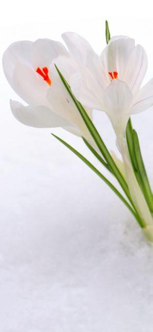 Flower HD Phone Wallpaper 077 300x650 - White Wallpapers