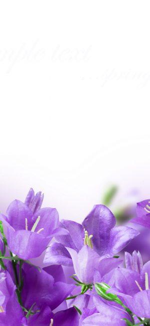 Flower HD Phone Wallpaper 081 300x650 - White Wallpapers