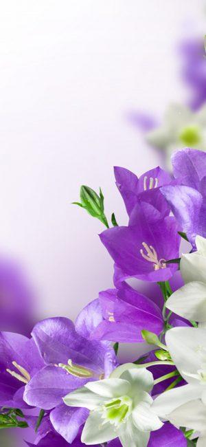 Flower HD Phone Wallpaper 121 300x650 - White Wallpapers