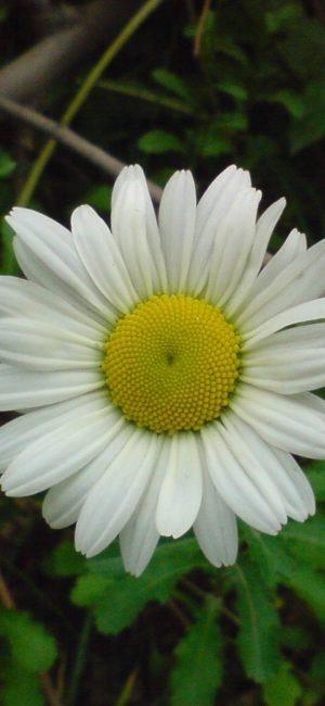 Flower HD Phone Wallpaper 128 300x650 - White Wallpapers