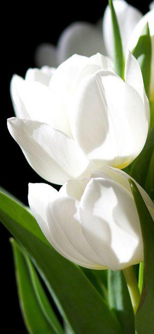 Flower HD Phone Wallpaper 155 300x650 - White Wallpapers