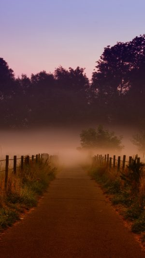 Fog Trees Path Wallpaper 1080x1920 300x533 - Nature Wallpapers