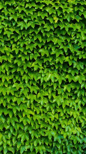 Foliage Plant Green Wallpaper 1080x1920 300x533 - Nature Wallpapers