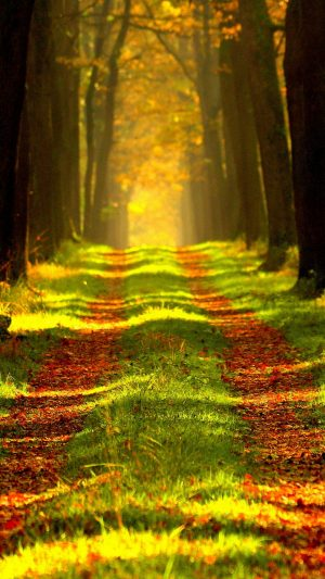 Forest Autumn Path Wallpaper 1080x1920 300x533 - Nature Wallpapers