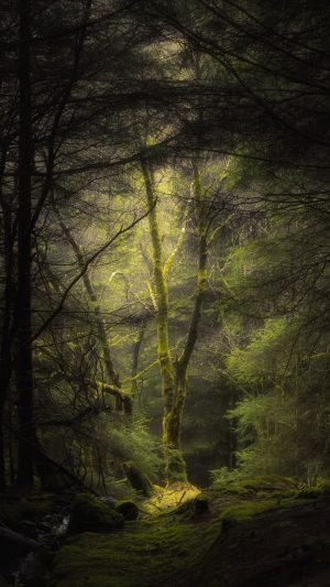 Forest Fog Trees Wallpaper 1080x1920 300x533 - Nature Wallpapers