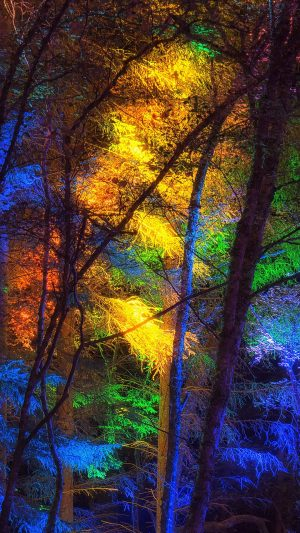 Forest Trees Colorful Lights Wallpaper 1080x1920 300x533 - Nature iPhone Wallpapers