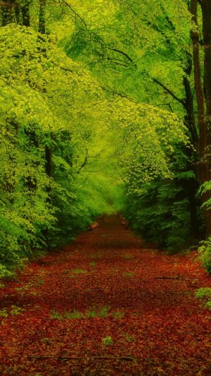Forest Trees Pathway Wallpaper 1080x1920 300x533 - Nature Wallpapers