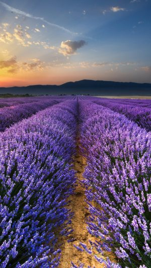 Lavender Field Flowers Wallpaper 1080x1920 300x533 - Nature Wallpapers
