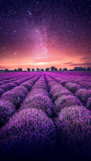 Lavender Field Starry Sky Wallpaper 1080x1920 300x533 - Nature iPhone Wallpapers
