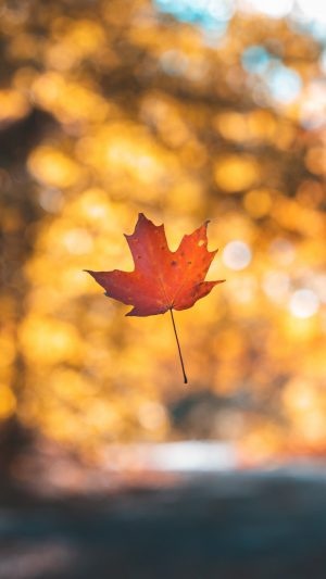 Leaf Maple Autumn Wallpaper 1080x1920 300x533 - Nature Wallpapers