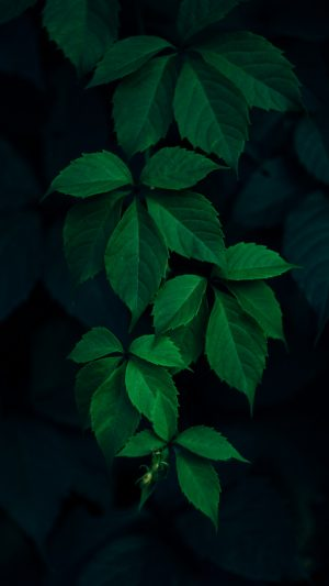 Leaves Green Branches Dark Wallpaper 1080x1920 300x533 - Clouds Mountain Trees Wallpaper - [1080x1920]