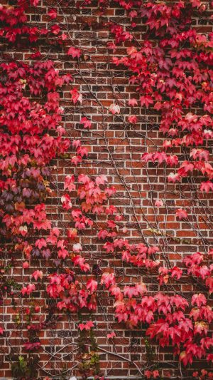 Leaves Wall Branches Bricks Wallpaper 1080x1920 300x533 - Nature Wallpapers